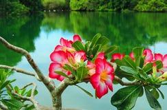 Deserto Rosa Immagine Stock Libera da Diritti