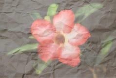 Deserto Rosa Immagini Stock
