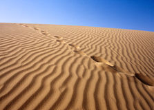 Deserto sabbioso, Sahara immagine stock