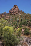 Deserto Ssring Fotografia Stock