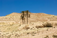 Deserto tunisino Imagem de Stock Royalty Free