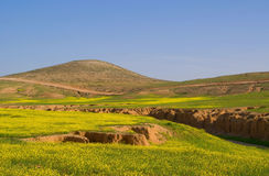 Deserto verde Fotografia de Stock Royalty Free