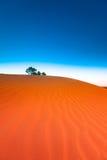 Duna de areia vermelha com ondinha e o céu azul Fotos de Stock Royalty Free