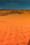 Trilhas animais na duna de areia vermelha Fotos de Stock Royalty Free