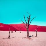 Deserto vermelho e céu ciano & x28; Árvores inoperantes de Camelthorn em Vlei inoperante, Nam foto de stock