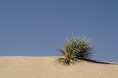 Deserto vivo Fotografia de Stock