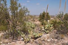 Deserto vivo Foto de Stock