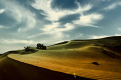 Deserts Dubai Stock Photography
