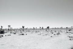 Desertscape estéril Fotografia de Stock