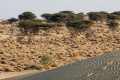 Desertscape sand dunes dry shrubs trees horizon Stock Photo