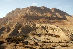 deset以色列山yehuda 免版税库存图片