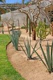Deset Garden Stock Image