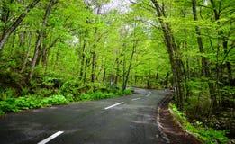 Desfiladeiro de Oirase em Aomori, Japão do norte Imagens de Stock