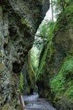 Desfiladeiro de Oneonta Desfiladeiro do Rio Columbia Fotografia de Stock