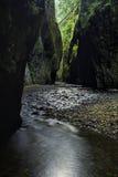Desfiladeiro de Oneonta em Oregon Imagem de Stock Royalty Free