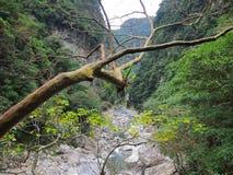 Desfiladeiro de Taroko, Hualien, Taiwan Fotografia de Stock Royalty Free