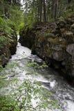 Desfiladeiro eliminado as plantas pouco vigorozas do rio, Oregon fotos de stock