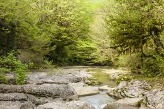 Desfiladeiro na Abkhásia Fotografia de Stock Royalty Free