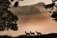 Desfile de los ciervos imagen de archivo