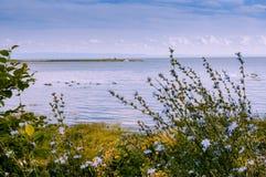 Desfile de los gansos y flores azules naturales Imagen de archivo