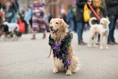 Desfile del animal doméstico de Beggin' fotos de archivo libres de regalías