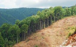 Desflorestamento Fotografia de Stock Royalty Free