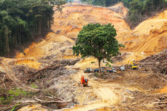 Desflorestamento imagens de stock