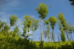 Desflorestamento Imagem de Stock