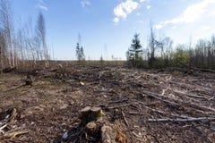 Desflorestamento com muitos ramos abandonados imagem de stock royalty free