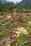 Desflorestamento em Roménia Foto de Stock