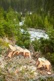 Desflorestamento em Roménia Fotografia de Stock