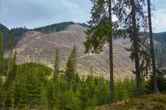 Desflorestamento em Roménia Imagem de Stock
