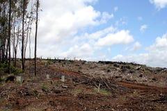 Desflorestamento em Tasmânia, Austrália Fotografia de Stock