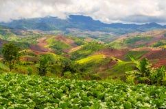 Desflorestamento para a agricultura de montanhas Imagens de Stock Royalty Free
