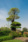 Desgn tree in gucheng park shanghai china Royalty Free Stock Images