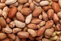 Deshelled peanuts Stock Image