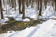 Deshiele en el bosque de la primavera Imagen de archivo