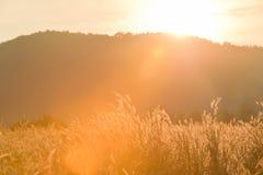 Desho-Rasenfläche unter der Sonne, die in der Sommerzeit scheint stockfoto