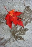 Deshoje del otoño Fotos de archivo