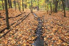 Deshoje del otoño Imagen de archivo