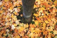 Deshoje del otoño Imagen de archivo libre de regalías