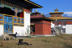 Desi-Hunde an Tashiding-Kloster Lizenzfreies Stockfoto
