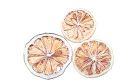 Desiccated  citrus slice Stock Image