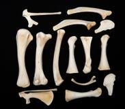 Desiccated Zwierzęce kości Obrazy Royalty Free