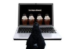 Desiderio del ` s del cane Fotografia Stock