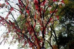 Desiderio dell'albero Fotografia Stock Libera da Diritti