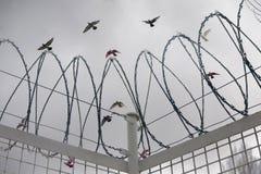 Desiderio per libertà Immagine Stock Libera da Diritti