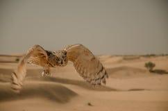 Desierto árabe Fotografía de archivo libre de regalías