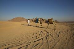 Desierto árabe en safari del shiekh del EL del sharm de Egipto Foto de archivo