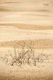Desierto Fotos de archivo